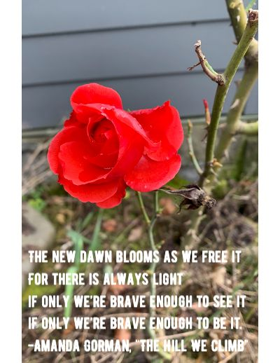 "Picture of winter-blooming rose with quote from Amanda Gorman's poem ""The Hill We Climb."""