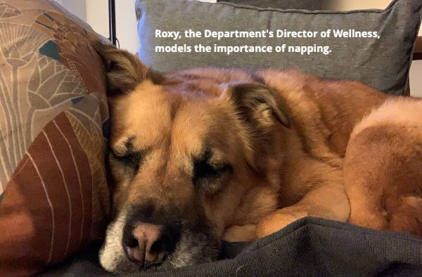 Roxy, our fluffy brown dog and the Department's Director of Wellness, models the importance of napping.