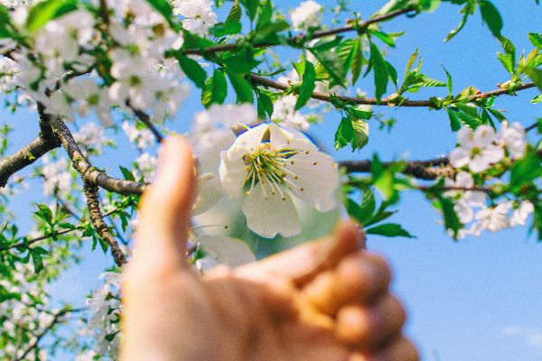 zoom in, here on a cherry blossom but in your life, on a situation or problem.